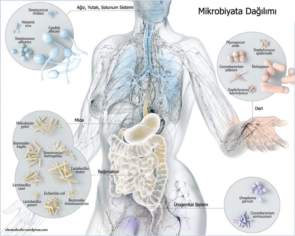 mikrobiyata1