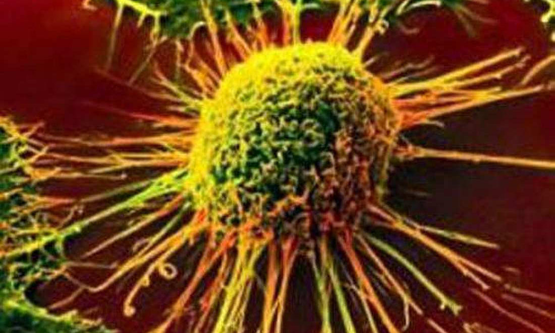 Kanserin Kendini Yok Etme Mekanizması