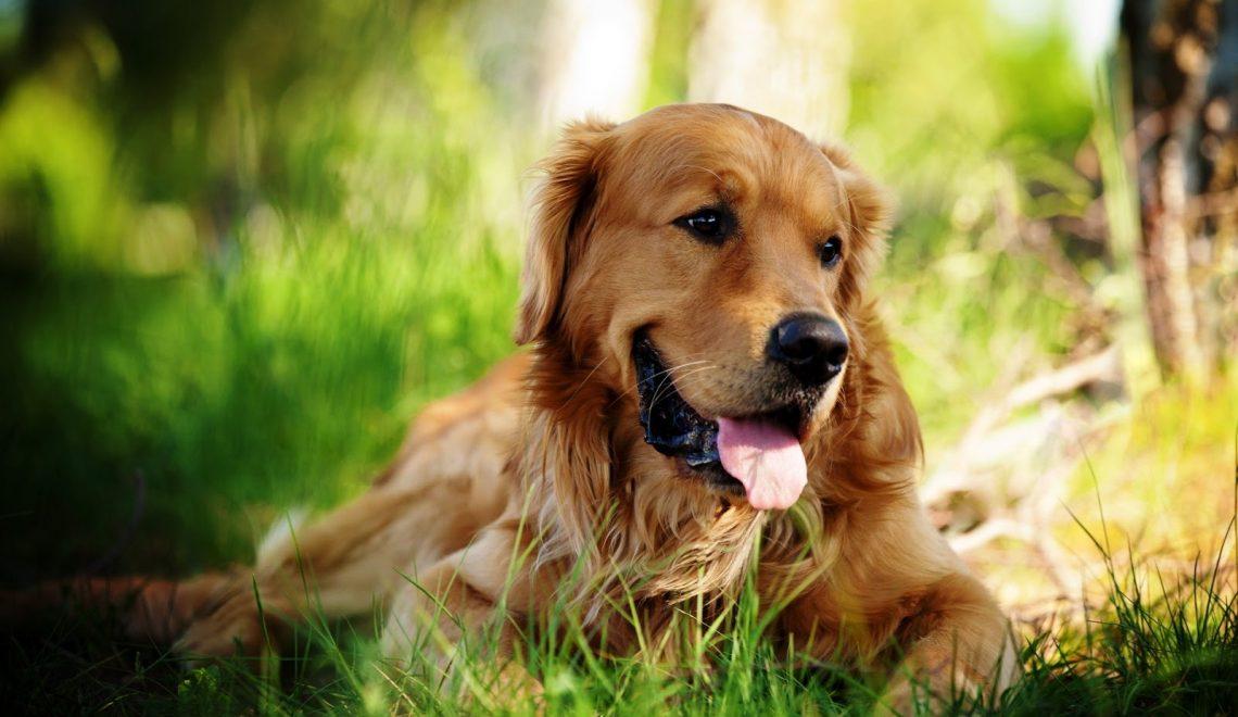 Köpek Salyası Ölümcül Olabilir