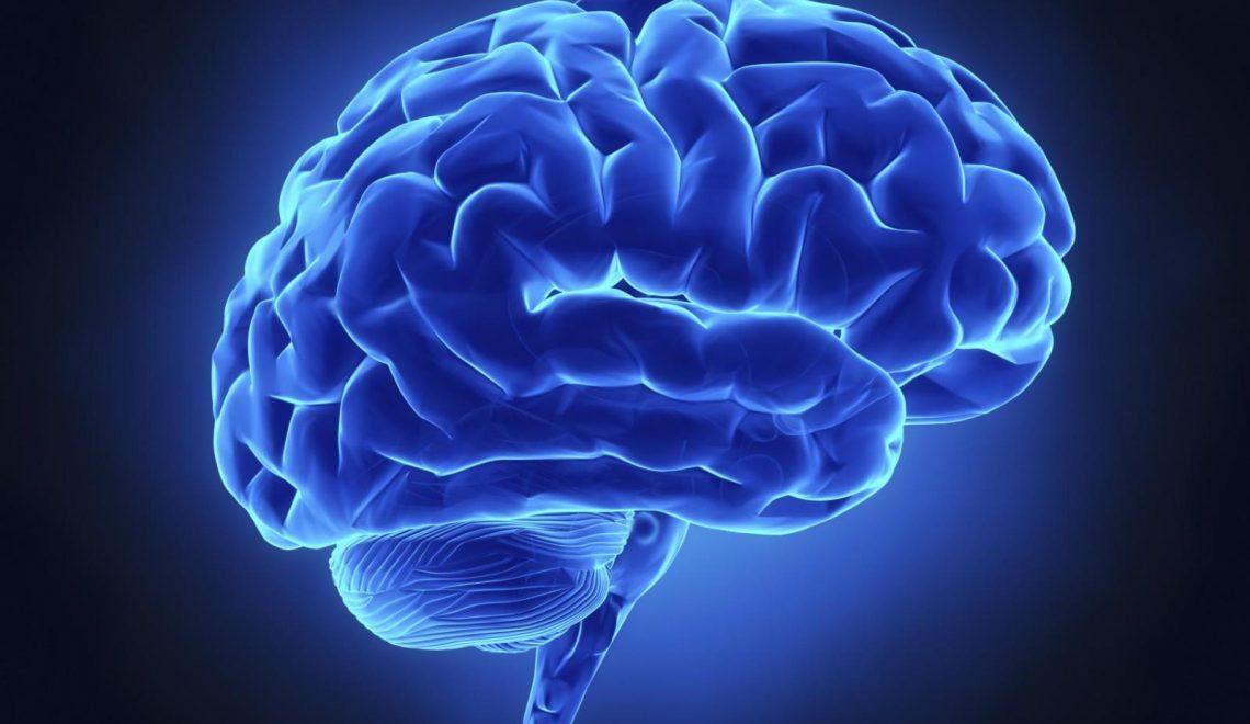 Beynimizde Yaşayan Bakteriler
