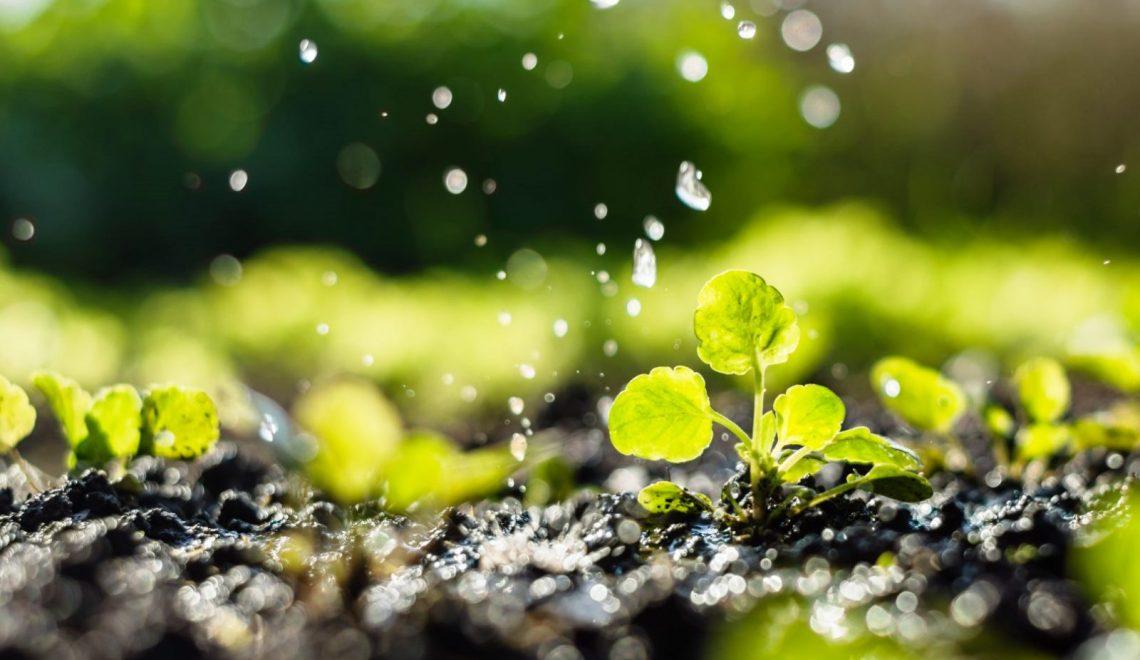 Yağmurda Toprak Kokusu